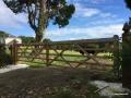 Timber Paddock Gates 3.0m